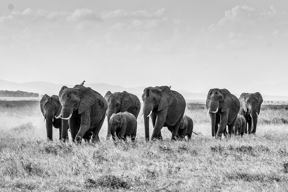 Why Kenya Needs To Conserve Its Wildlife, Flora, and Landscapes