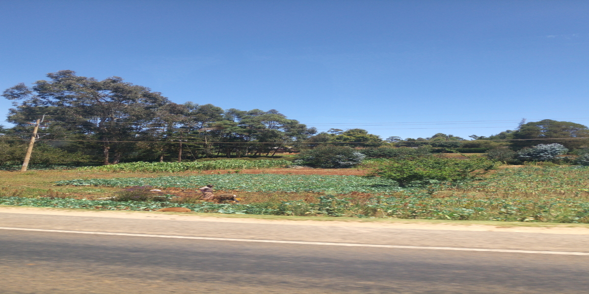 What Unmanaged Shamba System is doing to the Forest Cover in Kenya