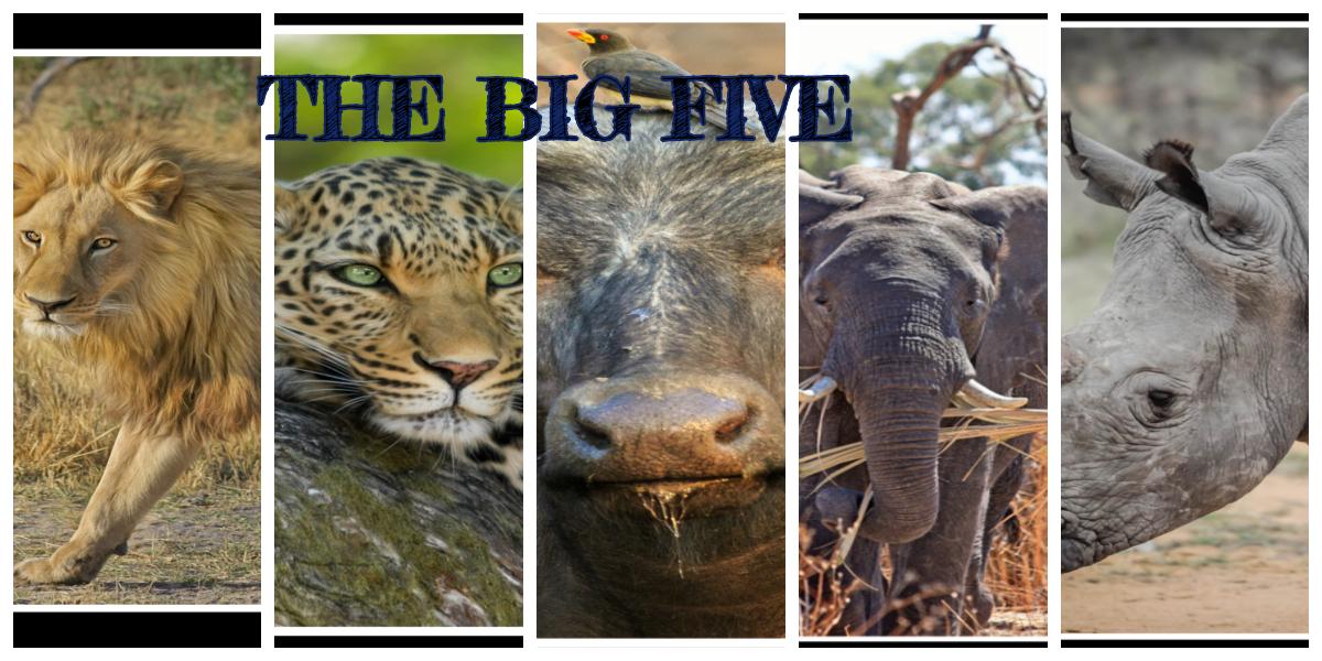 "THE ""BIG FIVE"": Key African Wildlife Species found in Kenya"