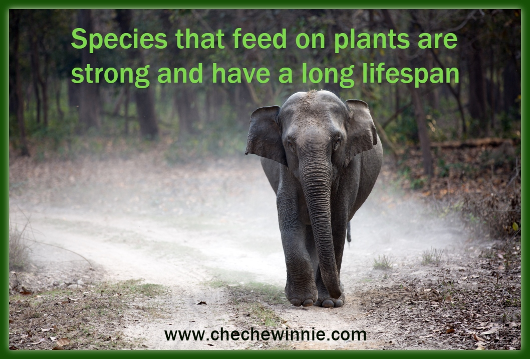 Species that feed on plants are strong and have a long lifespan