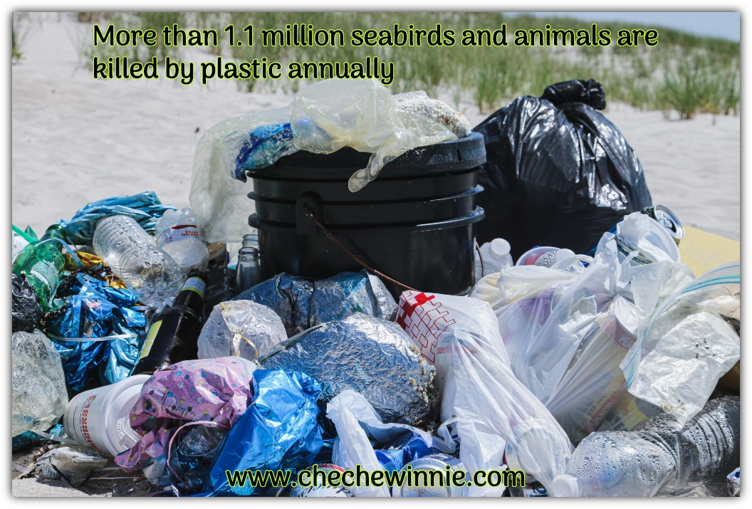 More than 1.1 million seabirds and animals are  killed by plastic annually