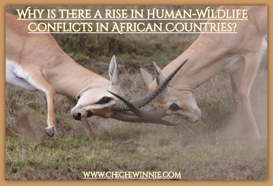 Why is there a rise in Human-Wildlife Conflicts in African Countries?