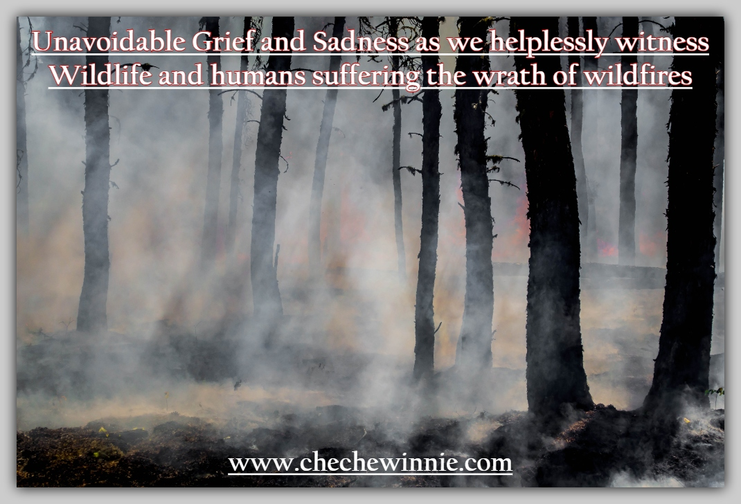 Unavoidable Grief and Sadness as we helplessly witness Wildlife and humans suffering wrath of wildfires